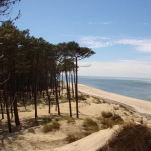 The Les Landes de Gascogne forest is unspoiled and natural, with no pesticides, no herbicides