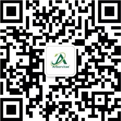 About Arborvitae for Chinese Community